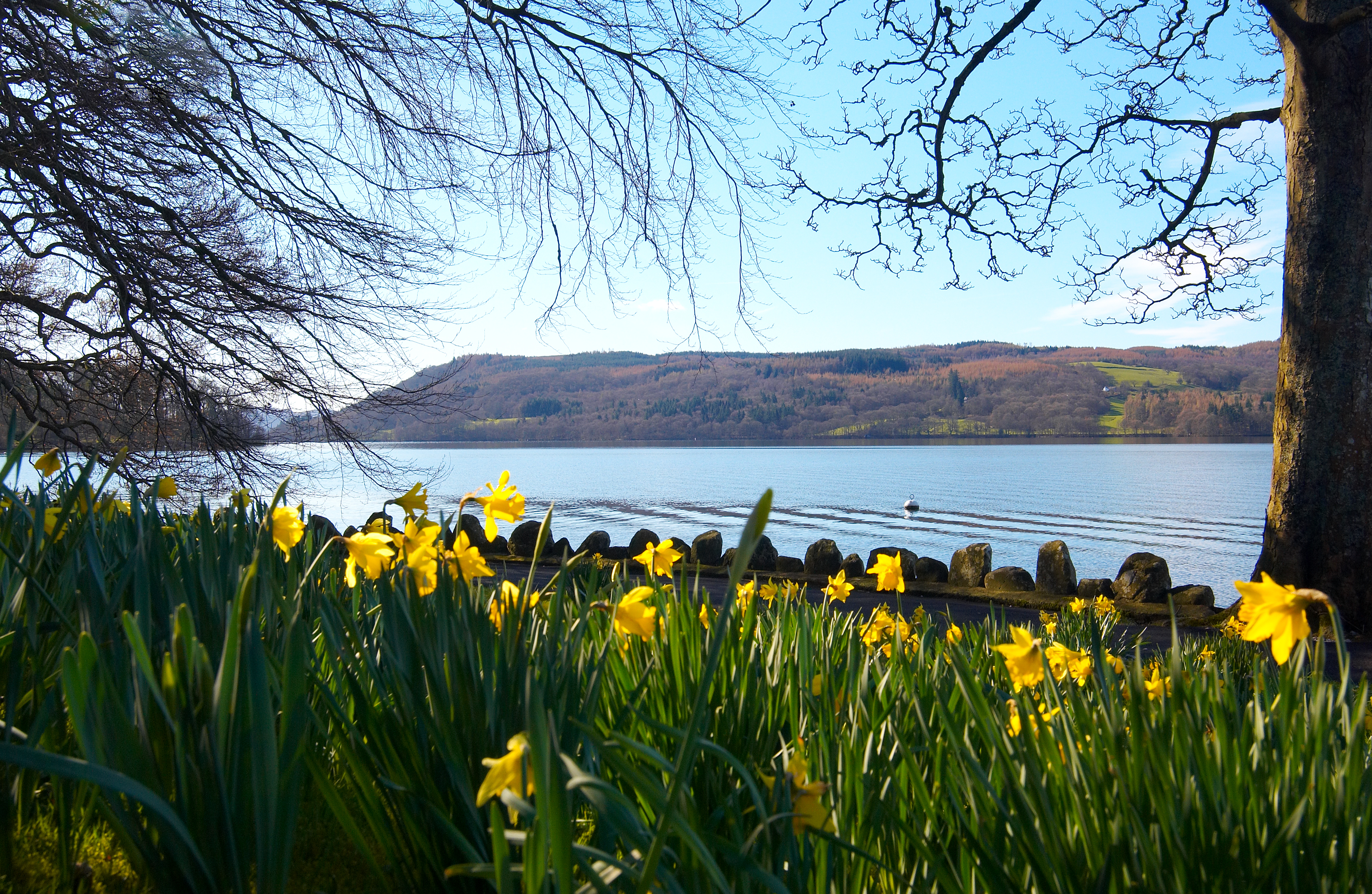 Walk along the shores of Lake Windermere at Springtime and enjoy these wonderful views, while pretty daffodils bob in the breeze at your feet.