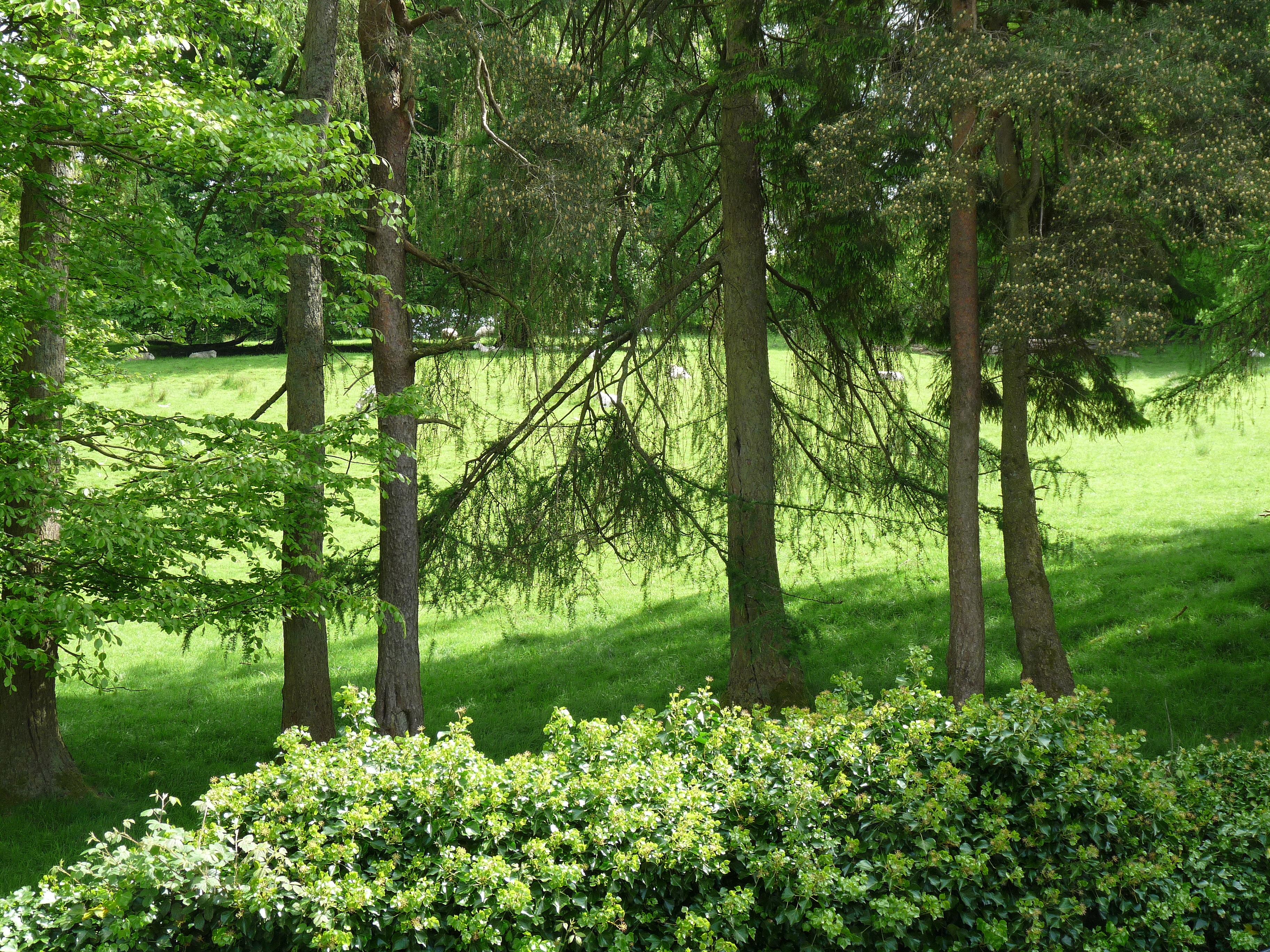 Trees and fields behind Blenheim Lodge