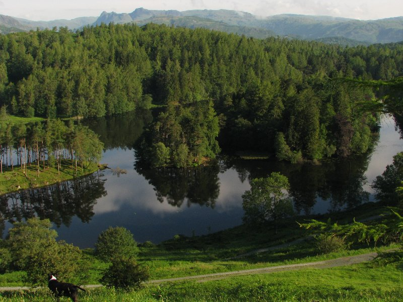 Photo of Tarn Hows today courtesy of www.lakelandcam.co.uk.
