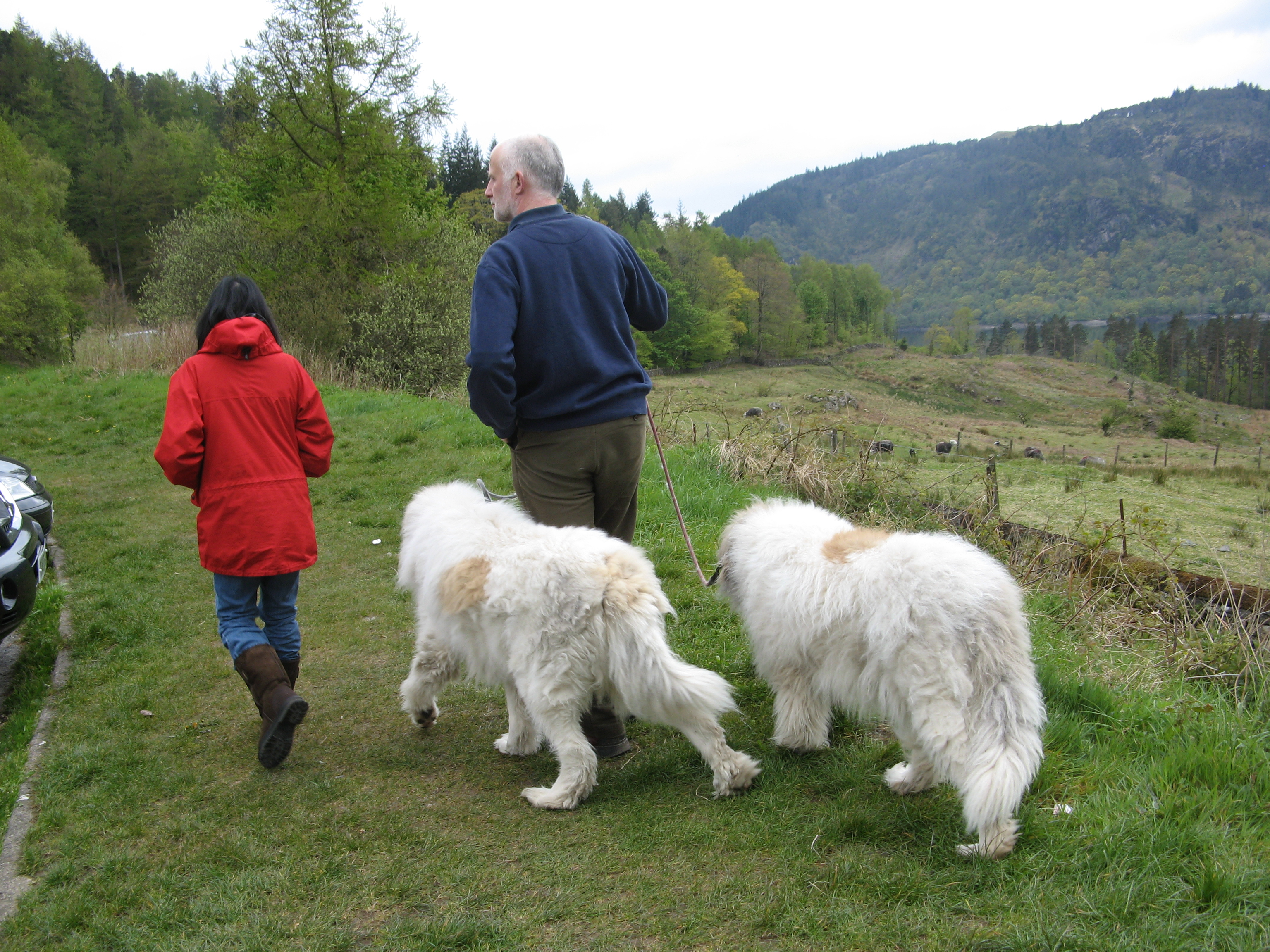 Our babies walking with us. Thirlmere is in the background, a manmade lake used as a reservoir.