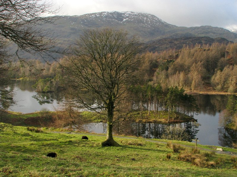 tarn hows, lake district scenery