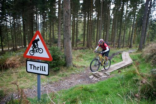 grizedale, lake district, mountain biking