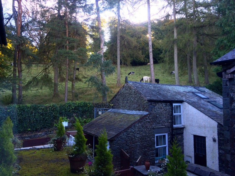 Look out of our windows on our first floor landing to see a herd of cows grazing peacefully on the fell which borders the back garden of our B&B.