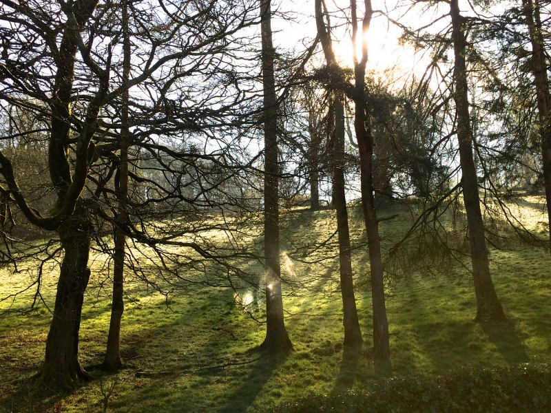 With the mist burning off, the sun was shining even more brightly on Brantfell. This photo was snapped from The Dalesway, our only woodland facing fell-side room at Blenheim Lodge B&B.