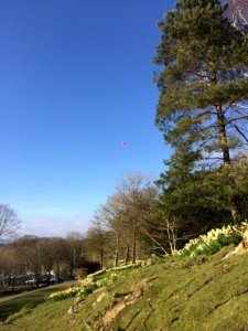 We saw a hot balloon in the air whilst driving to Gummers How. Stopping at Fell Foot Park, we were able to take a shot of the balloon as it floated high above our heads, Lake and fells.