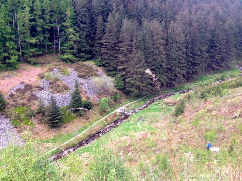 Walking down a steep bank towards Spout Force on the opposite side of the beck at Whinlatter Forest.