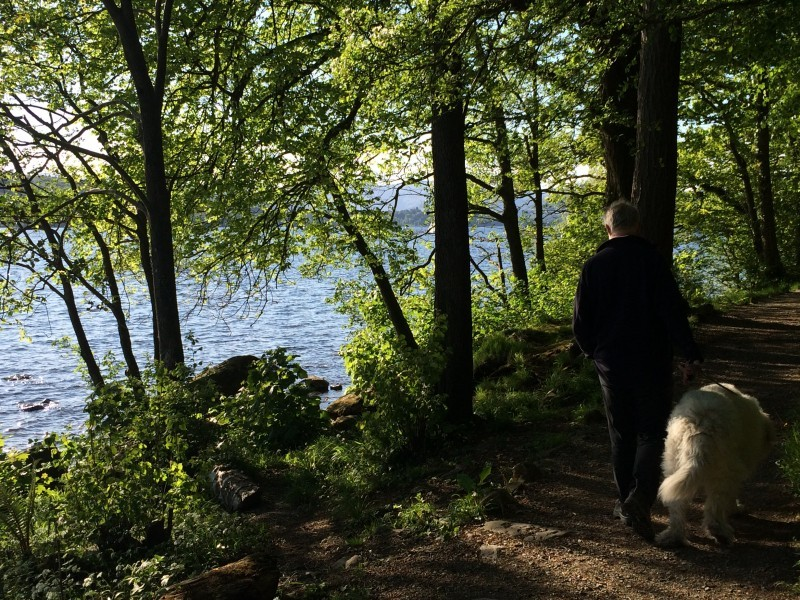 We enjoyed a leisurely stroll by the shores of Windermere today. 22.5.16