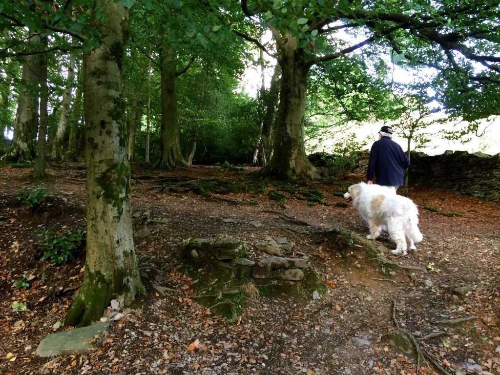 We walked along woodland paths towards Orrest Head summit.