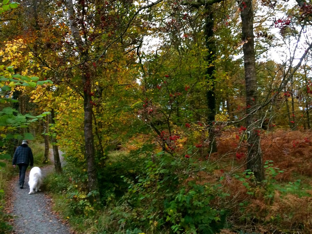 Part of the 6-mile walk by River Brathay to Bowness Ferry. (27.10.16)