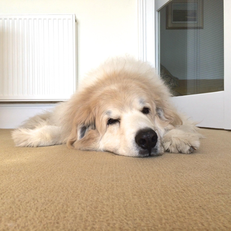 zack dozing in lounge