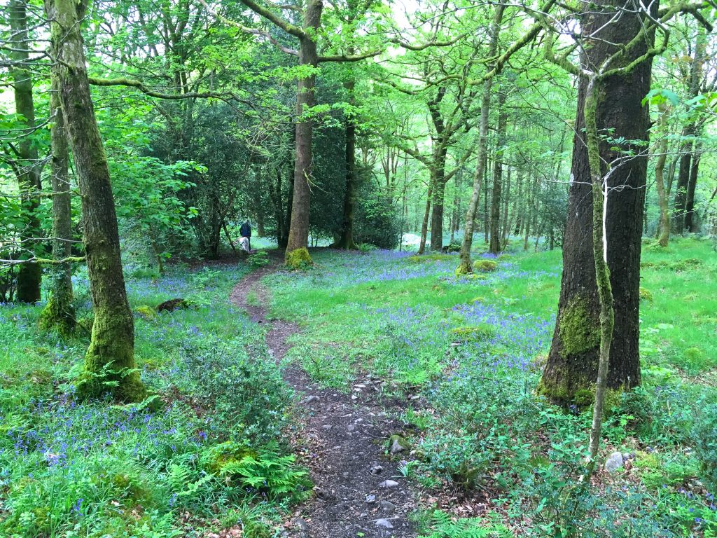 come walk in common wood with us blenheim lodge