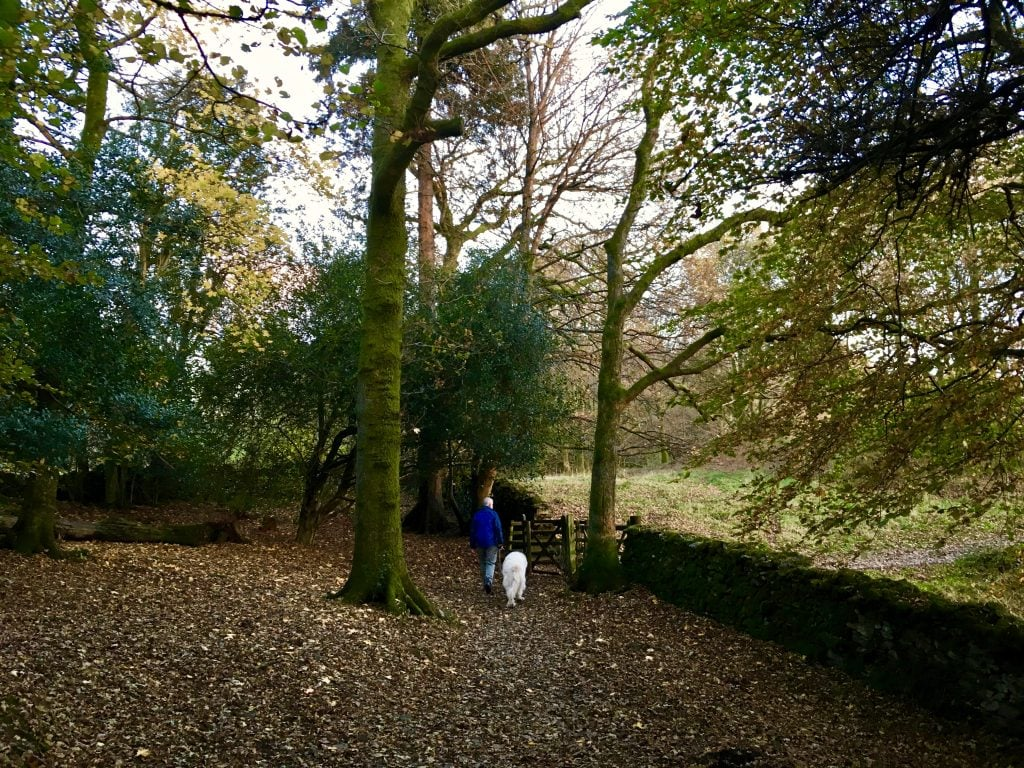 Walking through Autumn leaves on Brant Fell behind Blenheim Lodge B&B.