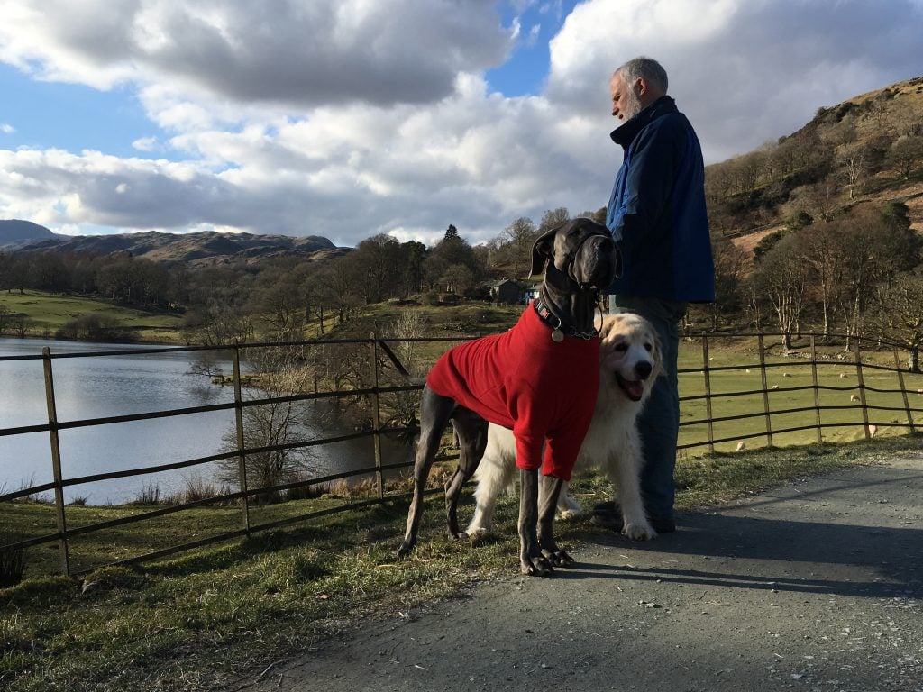 Dogs of Blenheim Lodge, Bowness B&B at Loughrigg Tarn