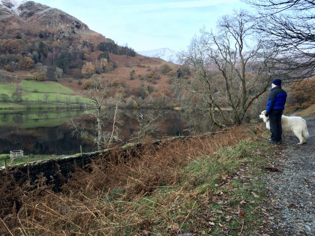 coffin route, rydal water, dog, pyrenean mountain dog, lake district, dog, rescue dog
