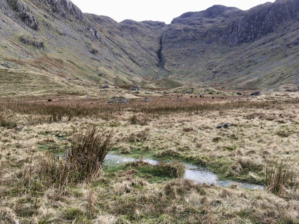 grass, waterlogged, water, walking, lake district walk