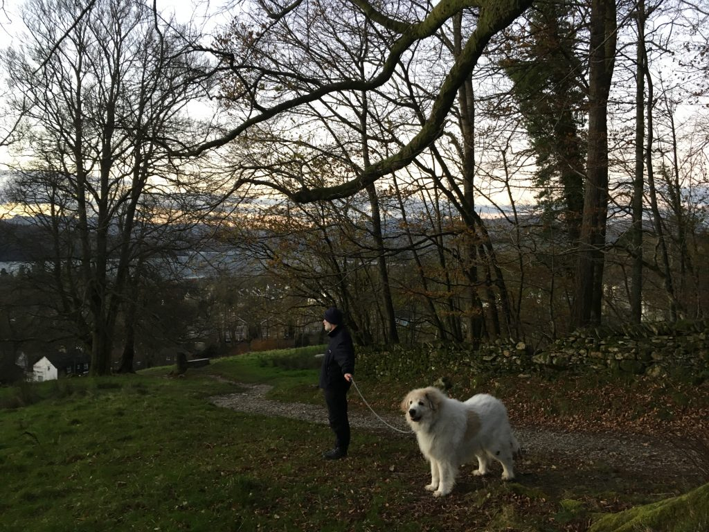 Pyrenean Mountain Dog walking The Dales Way Footpath