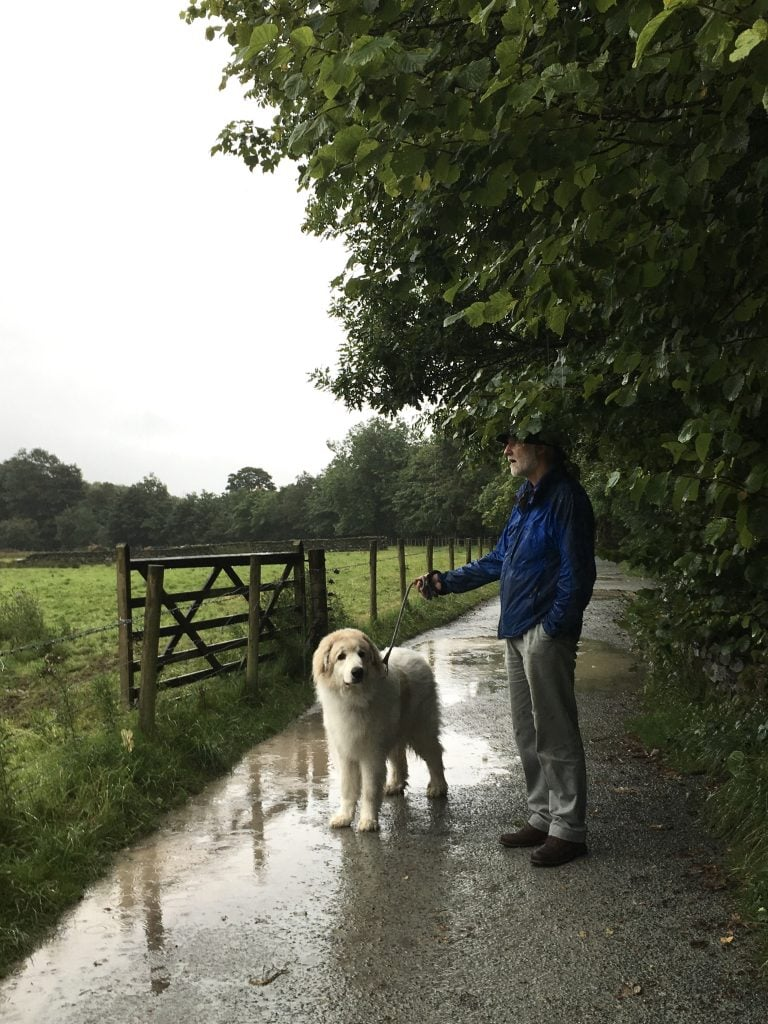 Fun rainy day walk with my dog at Elterwater