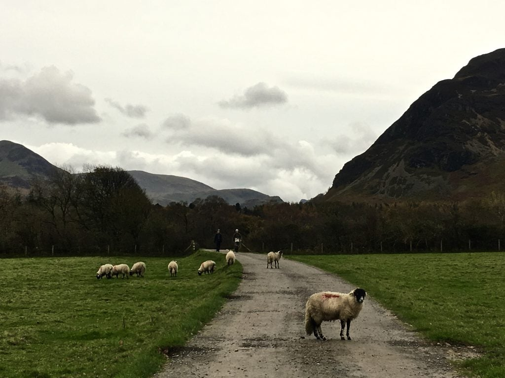 Sheep at Loweswater under cloudy grey rainy day skies