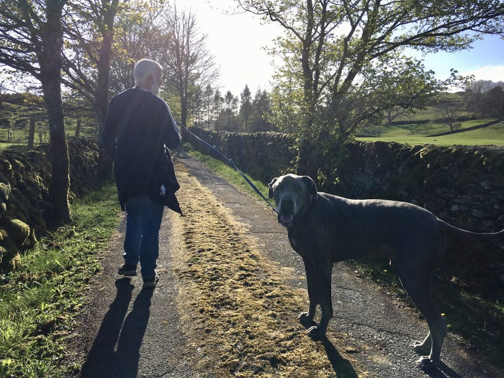 Dog walking on The Dales Way behind Staveley