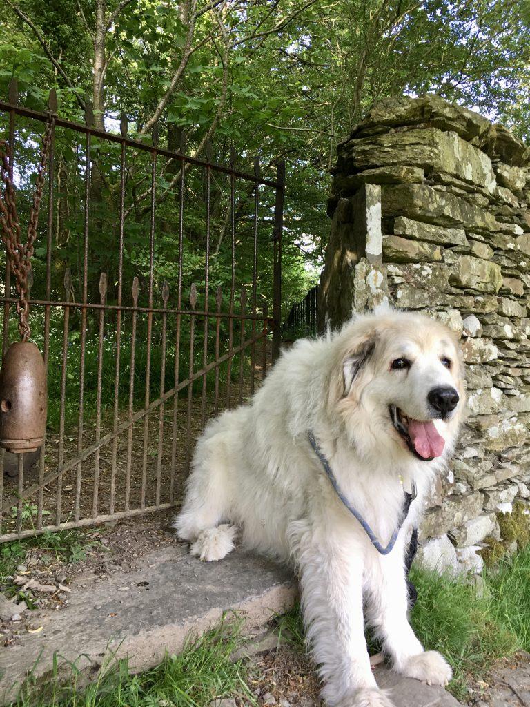 Dog sits at The Dales Way